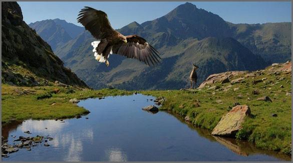 флора и фауна Андорры