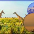 Популярные достопримечательности Кении