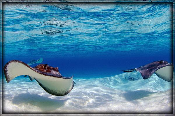 острова Кайман - достопримечательности