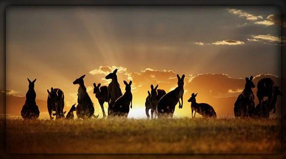 Что самое необычное в Австралии?
