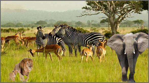 флора и фауна Анголы