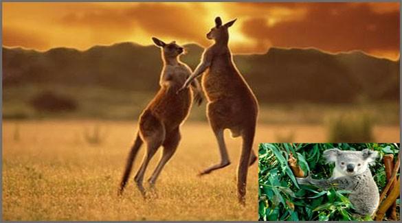 Флора-Австралии