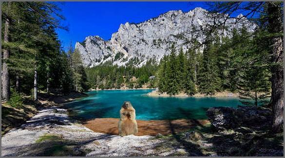 флора-и-фауна-Австрии