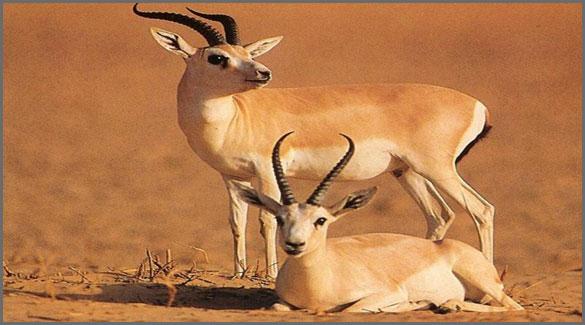 животные-Азербайджана