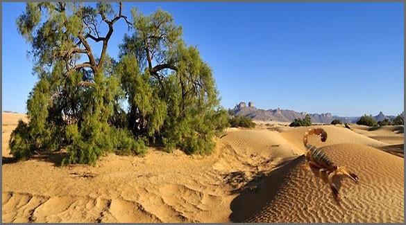 флора-и-фауна-Алжира