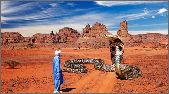 опасности-Алжира
